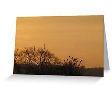 Starlings collecting to roost Greeting Card