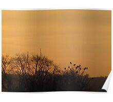 Starlings collecting to roost Poster