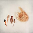 Feather Study no. 2 by Bethany Helzer