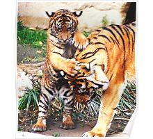 Tiger's family Poster