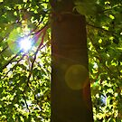 "Tree of Light by Christine ""Xine"" Segalas"