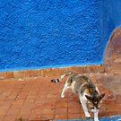 Streetcat in Rabat by bubblehex08