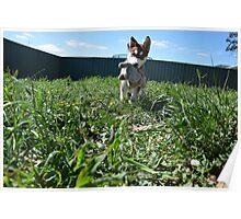 Jax- Cute husky malamute puppy Poster