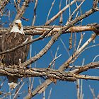 Eagle Eye by Forrest  Ray