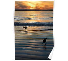 Seagulls @ Sunset Poster