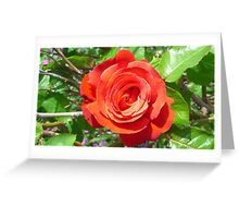 red rose flower Greeting Card