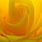 Sun Yellow by Kidono-chan