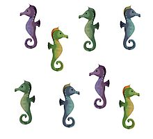 Multiple Seahorses Photographic Print
