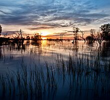 Menindee Magic by Malcolm Katon