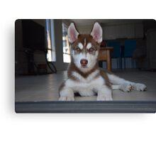 Jax- Cute husky malamute puppy Canvas Print