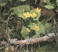 Marsh Marigold by Shirley Wood