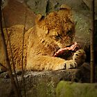Little lion cub eating her meal by steppeland