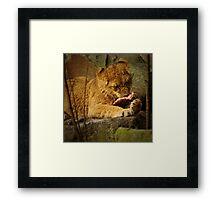 Little lion cub eating her meal Framed Print