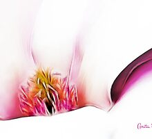 Abstract Magnolia by Anita Pollak