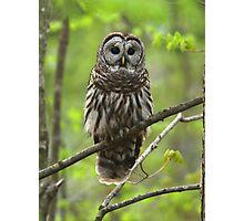 Barred Owl Photographic Print