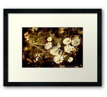 Grunge Chamomiles Framed Print