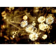 Grunge Chamomiles Photographic Print
