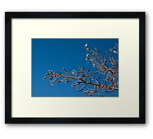 Mother Nature's Christmas Decorations - Shiny Ice Baubles  Framed Print