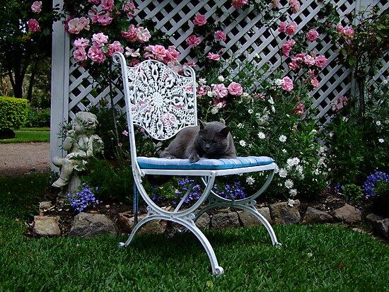 Quiet Please, Sleepy Kitty by Gabrielle  Lees