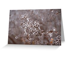 Of Weeds, Seed Pods and Crystals  Greeting Card