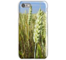 Ripening wheat iPhone Case/Skin