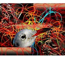 Marine Composition Photographic Print