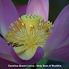 Carolina Queen Lotus - Holy seat of Buddha by jono johnson
