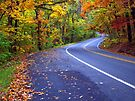 Autumn Drive On The Pig Trail by NatureGreeting Cards ©ccwri
