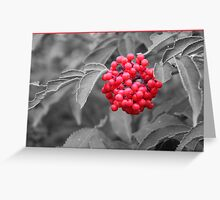 A Touch Of Elderberry Greeting Card