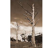 Dead Gum Trees Photographic Print
