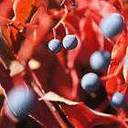 Berry Jungle by BlueMotor