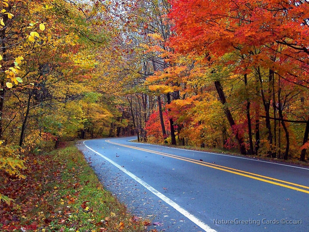 Autumn On A Scenic Highway by NatureGreeting Cards ©ccwri