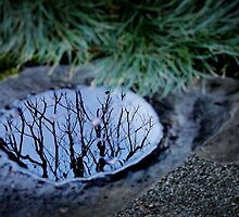 Winter Reflections 1 by Ellen Cotton