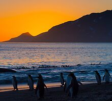 Sunrise, St Andrew's Bay, South Georgia by parischris