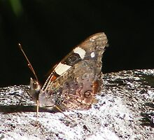 Forest Moth. by Esther's Art and Photography
