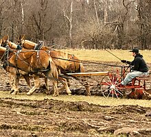 A Three Hitch Mule Team by barnsis