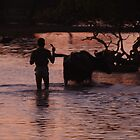 Sunset with a water buffalo herder, Yala National Park, Sri Lanka by Derek  Rogers