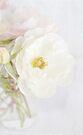 floral dreams by Teresa Pople
