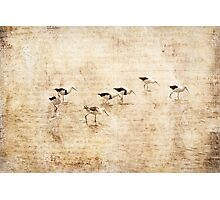 Banded Stilts Photographic Print