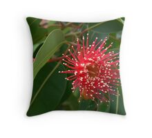 Red flowing gum flower Throw Pillow