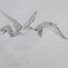 Godwits in Flight by ColinWilliams