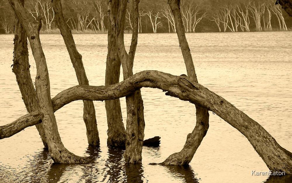 Lake Ainsworth by Karen Eaton