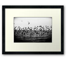 Flockr Framed Print
