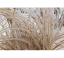 Icy Grass Sculptures Photographic Print
