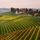 Autumnal vineyards  by annalisa bianchetti