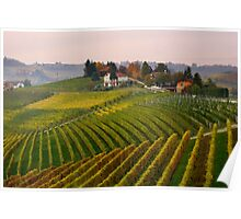 Autumnal vineyards  Poster