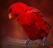Red Parrot by Karen Martin IPA