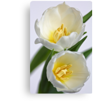 Fresh Tulips... a little later... Canvas Print