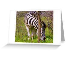 Zebra - Khama Rhino Sanctuary, Serowe, Botswana, Africa Greeting Card