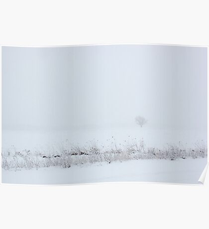 Lone Tree in Snow Poster